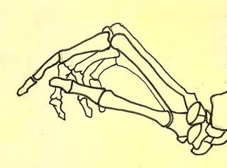 Hand Bones Side View